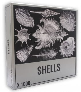 Shells jigsaw puzzle for adults