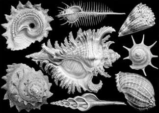 Shells 1000 piece jigsaw by Cloudberries
