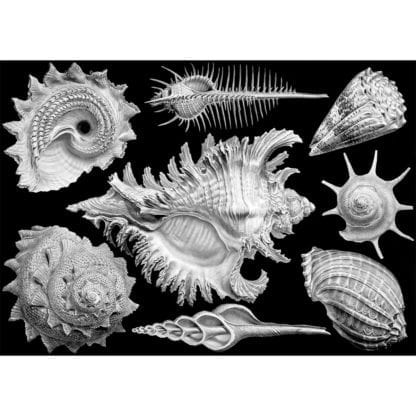 Shells 1000 piece jigsaw by Cloudberries