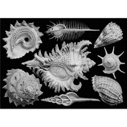 Shells 1000 -piece jigsaw by Cloudberries