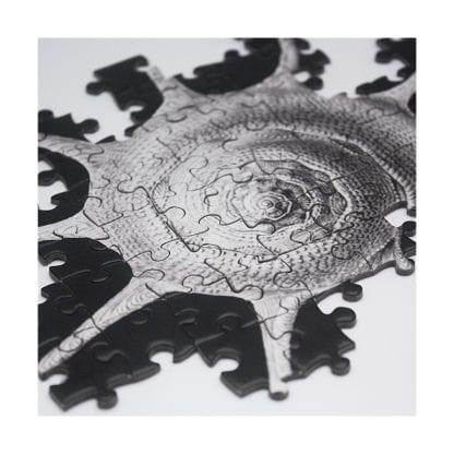 Shells puzzle 1000 pieces